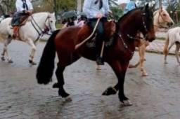 Cavalo Crioulo Domado
