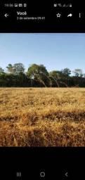 Vendo terreno em Trindade