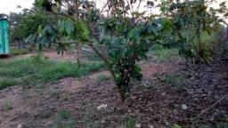 Vendo ou troco um terreno no Bujari, metragem15x30.