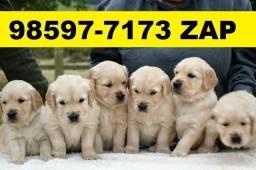 Canil Filhotes Cães Incríveis Golden Pastor Rottweiler Labrador Dálmata