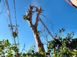 Poda de árvore e corte