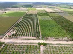 Fazenda de Manga e Banana no Projeto Maria Tereza - 10 Hectares - Venda