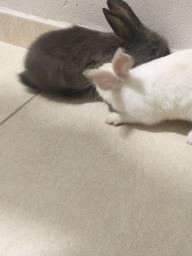 Dois coelhos