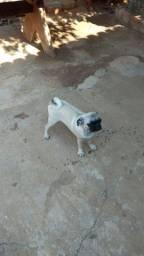 Vendem se cachorro Raca pág