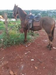 Zeus rancho 3rrr