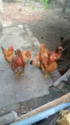 9 rodlan 4 galinha 5 galo