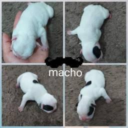 Lindos Babys Bulldog Frances
