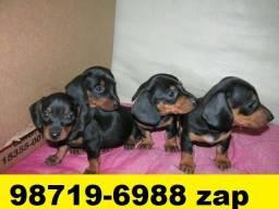 Canil Filhotes Perfeitos Cães BH Basset Lhasa Shihtzu Beagle Yorkshire Maltês Poodle