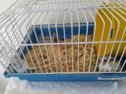 Vende se gaiola e uma hamster femea
