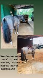 Cavalo crioulo top