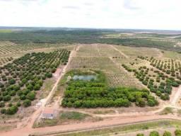 Fazenda 43 Hectares - Venda
