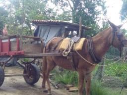 Burra com carroça