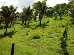Vendo fazenda no entorno do DF