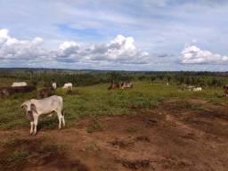 Fazenda (Porteira fechada) no Apuí-AM
