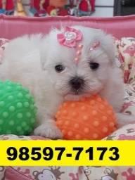 Canil Filhotes Pet Cães Top Maltês Poodle Lhasa Yorkshire Beagle Shihtzu