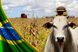 *Fazenda - lotes - Rural - Maquinas