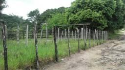 Linda Fazenda em Joaquim Gomes 60 hectares apenas 750 mil