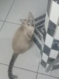 Estou doando esta gata 11 meses linda e dócil