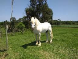 Cavalo para cruzar