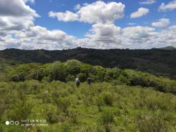 Arrendo fazenda 115 hectares