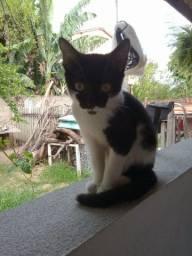 Doação de gatinha fêmea com 4 meses