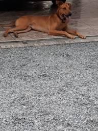 Doa-se cachorro