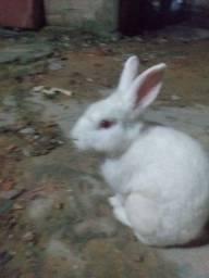 Vendo coelho barato