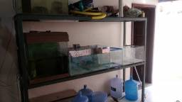 Bateria de aquarios com estante de metalon
