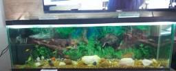 Vendo ou troco aquário top
