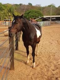 Cavalo Laço Comprido