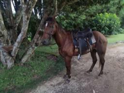 Cavalo chic bem domado
