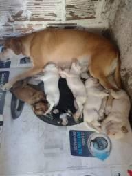 Adoção de filhotes de cachorro