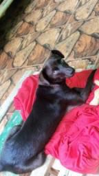 Doa-se cachorro (fêmea)