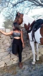 Aluga-se cavalos para passeio ou ensaio fotografico.