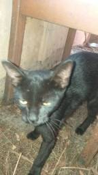 Estou doando esses gatinhos
