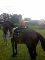 Venda de cavalo manso