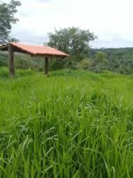 Horticultura ou plantação de milho verde e gado ou lazer
