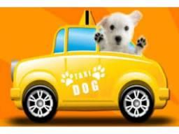 Taxi Dog transporte de cães e gatos