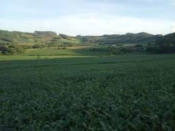 Fazenda 55 hectares