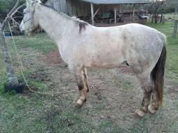 Cavalo de grande porte
