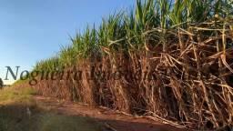 Sítio com 35 alqueires com plantação de cana, arrendada (Nogueira Imóveis Rurais)
