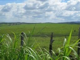 Excelente fazenda localizada na cidade de Caçapava/SP