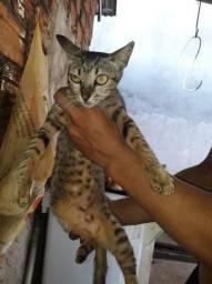 Gatos disponíveis para adoção