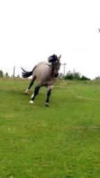 Vendo excelente cavalo crioulo