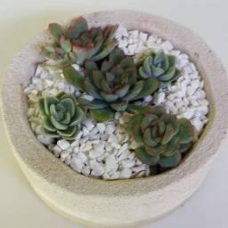 Lindo Mini Vaso com Suculenta.