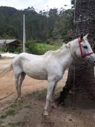 Vendo cavalo +sela