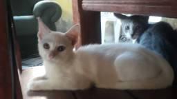 Gatinhas fêmeas. Três meses. *