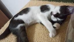 Doa-se uma gatinha de estimação