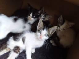 Gatinhos ( para adoção )