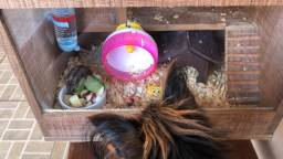 Casa de roedores